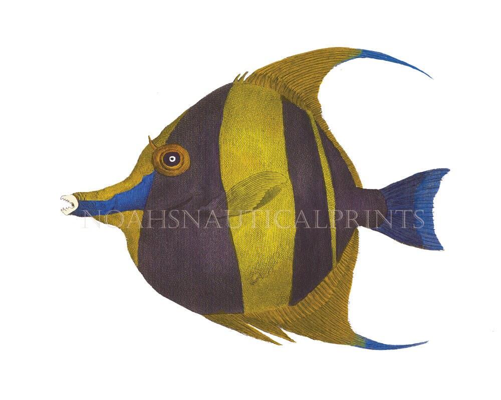 Tropical Fish Prints. Le Conu Coral Reef Fish. Bright and