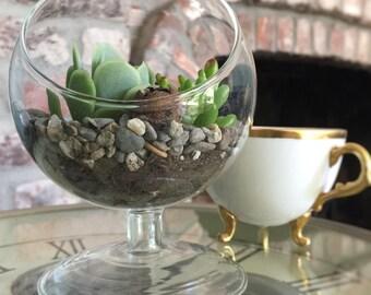 Succulent Terrarium DIY Kit