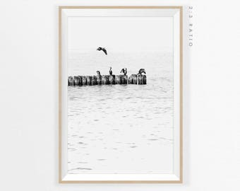 SEABIRDS PHOTOGRAPHY PRINT, Scandinavian Modern Poster, Coastal Art Print, Minimalist Photography, Black and White Wall Art, Seascape Print