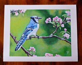 Bluejay In Spring Fine Art Print