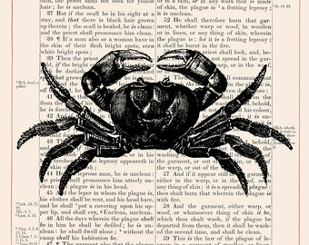 Vintage Crab on 1883 Bible Paper