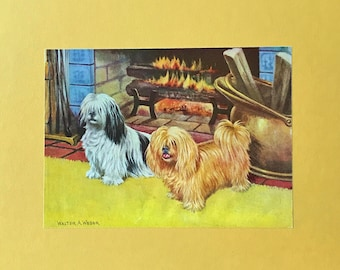 1940's Tibetan Terrier Dog Art by Walter Weber Mother's Day Gift!