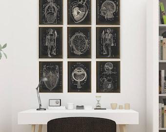 ANATOMY PRINT SET of Nine Anatomy Charts, Anatomy Poster, Scientific Illustration, Anatomical Drawing, Anatomy Print, Medical Art, Doctor