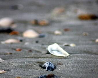Beach Ocean Print, Seashell Print, Coastal Wall Art, Beach Photography, Tropical Decor Print, Wall Art Coastal, Beach Decor
