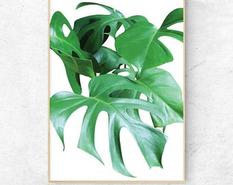 Monstera deliciosa, monstera print, Leaves print, botanical prints,  tropical leaf print,  plants art, green print, Nature Art, green leaves