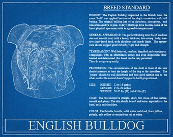 English Bulldog Portrait / English Bulldog Art / English Bulldog Wall Art / English Bulldog Print / English Bulldog Gift