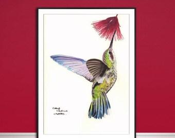 Hummingbird fine art print, Bird fine art print, coloured pencil bird drawing, bird artwork, fine art Giclee print, original animal art