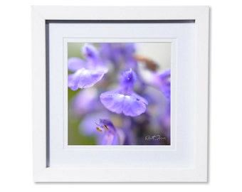 Purple Salvia Petals Photo Print or Canvas