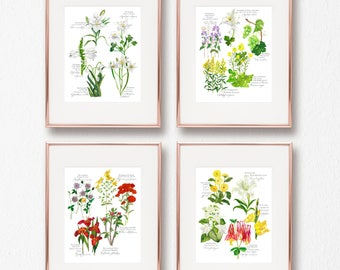 Botanical Rosary Collection Complete Set, Joyful, Luminous, Sorrowful, Glorious