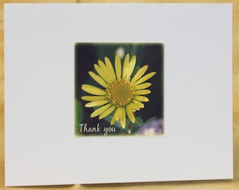 Thank You Yellow Daisy 5 pack