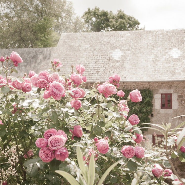 French Country Photography Rose Garden And Cottage