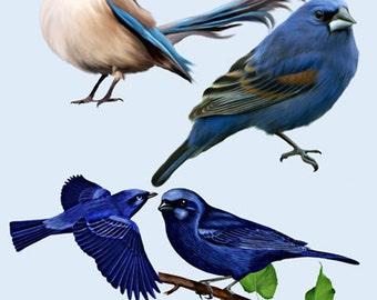 Bluebird Image, Bluebird Cutout, BLUE BIRD IMAGE, Bird Cutout, Large Clipart, Cute Cartoon Bird, Transparent Background, Transfer Template,