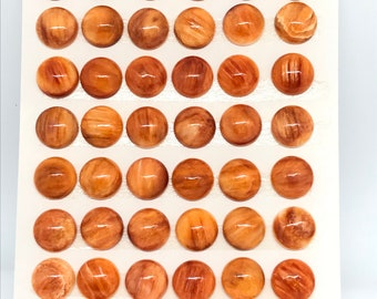 10MM  Orange Spiny Oyster Cabochons , (Pack of 2 pc.)natural spiny oyster, round cabs. AAA Quality .