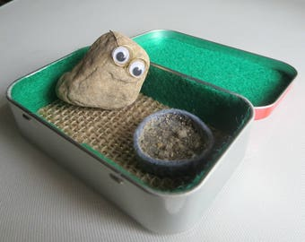 46b49766c8872 Pet Rock altoid tin - natural expression - googly eyes - wire glasses -  funny gift