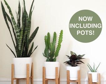 Merveilleux Mid Century Modern Plant Stand, Wooden Plant Stand, Indoor Plant Stand, 6