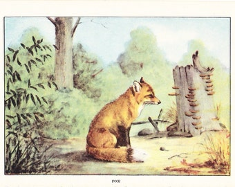 1926 Animal Print - Fox - Vintage Antique Natural History Home Decor Art Illustration for Framing What Does the Fox Say