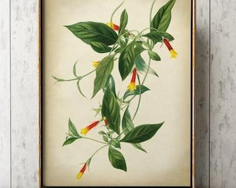 FLOWER BOTANICAL Print, Delicate Bellflower Print, Botanical Poster, Flowet Art, Vintage Botanical Art