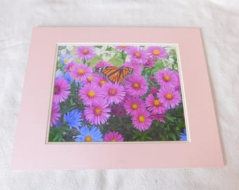 Butterfly on Daisys