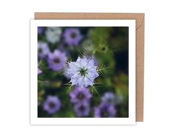 Nigella / Love In A Mist Flower Greeting Card