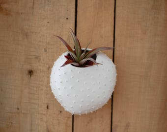 Hanging wall spiky air planter/ flower pot/ hanging planter/ white ceramic flowerpot/ air planter/ wall decor/ indoor garden/ wall planter