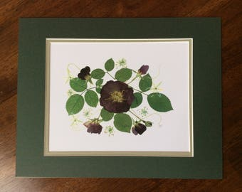 Pressed Flower Art Print - Miniature Roses