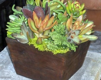 Succulent  Centerpiece, Succulent Garden, Succulent Tabletop - Succulent Fall  Wedding Table Decor Fall Centerpiece, Rustic Wedding
