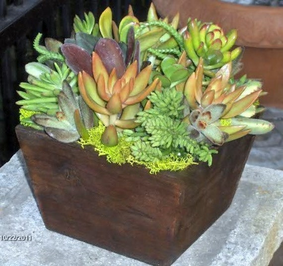 Items Similar To Fathers Day Gift Succulent Centerpiece