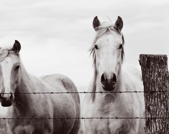 Horse photography, southwest, midwest, wall decor, equestrian, western, brown, black, white, new years decor