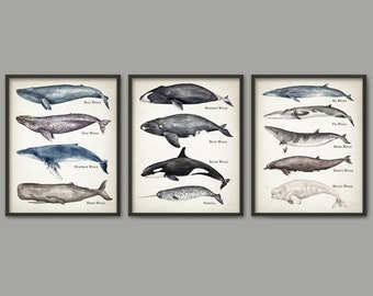 Whale Art Print Set Of 3, Large Whales Wall Art, Watercolor Whale Painting, Whales Of The World Home Decor, Blue Whale Bathroom Art #895