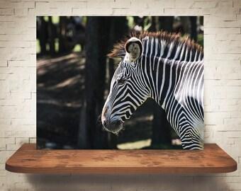 Zebra Photograph - Color Photo - Fine Art Print - Wall Decor - Pictures of Zebras - Wall Art - Animal Prints