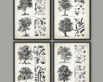 Vintage Tree Print Set Of 4 - Tree Print - Tree Art - Vintage Tree Botanical Home Decor - German Book Plate Tree Illustrations - AB518
