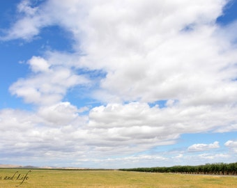 A bit of trees and a lot of clouds; Central Valley; California; Clouds; Fields; Nature; Landscapes; Beautiful Photography; Landscape Photos