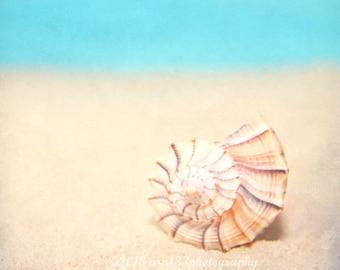 CLEARANCE Beach Photography, Nature Photo, Shell Photograph, Aqua, Peach,Still Life, Coastal Wall Art Home Decor - 8x8 inch Print - Spiral