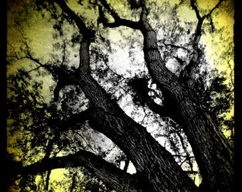 Tree Photograph, Monochrome, Nature Photo, 5x5 inch Photography print, Yellow, Gold, Abstract, Branches, Surreal, The Space Between