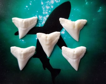 Custom made Shark Tooth Necklace.  Custom build one today with one of these Bull Shark teeth