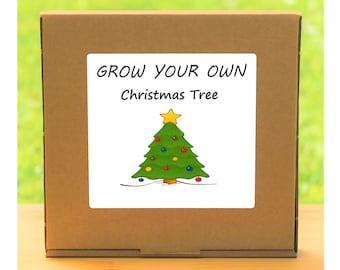 Unusual Windowsill Gardening Gift - Grow Your Own Christmas Tree Plant Kit