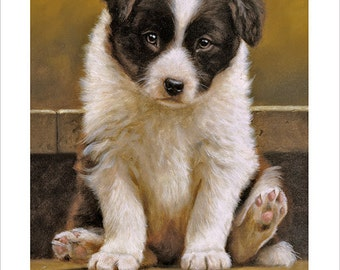 Border Collie Dog Portrait by award winning artist JOHN SILVER. Personally signed A4 or A3 size Print. BC015SP