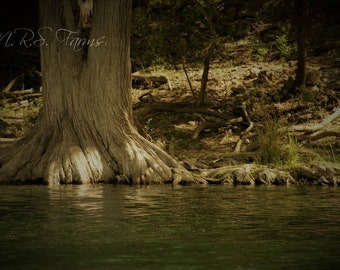 Riverbank Print Guadalupe River Texas