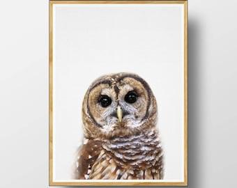 Owl Print, Nursery Animal Decor, Nursery Animal Print, Nursery Decor, Nursery Art Print, Woodlands Nursery, Printable Woodlands, Owl Art