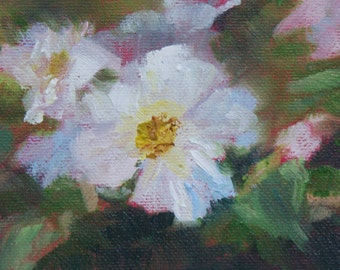 Rose White - 3 x 5 in.- Oil on Panel