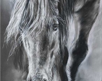 Through the Mists, (Highland Pony walking through the mist)