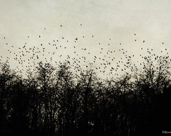 birds, flying, trees, nature, winter, fine art photography