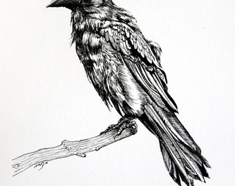 Original Raven Drawing - Raven or Crow Illustration - Bird Art - Ink Drawing