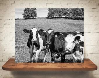 Cow Photograph - Fine Art Print - Black & White Photography - Wall Art - Home Decor - Wall Decor -  Farm Pictures - Farmhouse Decor - Cows