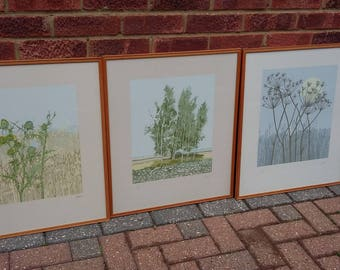 3 Set of Very Large Signed Botanical Prints Limited Edition Trees and Plants