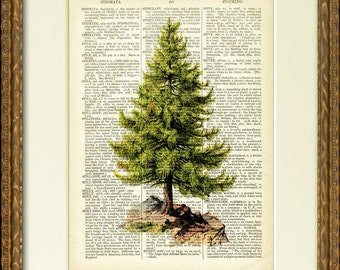 FIR TREE dictionary art print - a lovely old tree  illustration on an antique dictionary page- charming Christmas wall decor