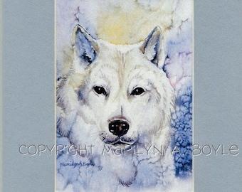 MATTED PRINT - WOLF; white wolf, arctic wolf, wildlife, nature, 8 x 10 inch, wildlife art,
