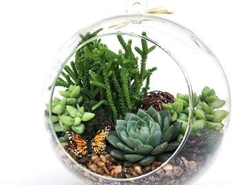 "Succulent Terrarium DIY Kit ""Woodsy""-6 inch Terrarium Kit-Housewarming Gift-Birthday Gift-Father's Day Gift Idea-Teacher Gift-Home Decor"
