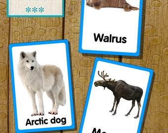 Polar animals flashcards. English, Romanian, Russian. DIY.