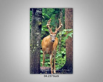 04.237 Buck Limited Edition, Signed and Numbered 8x12 Image